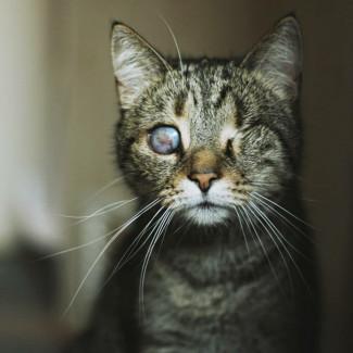 Kocie Uszko