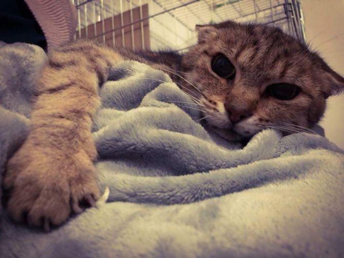 kot ekostraż