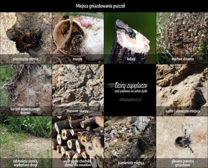 Miejsca gnazidowania dzikich pszczół